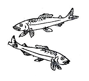魚 へん に 有り と 書い て 何と 読む